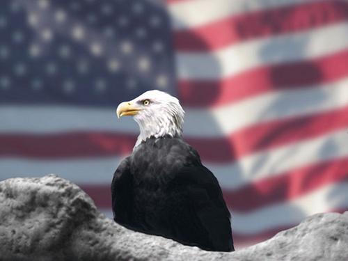 American%20Power.jpg