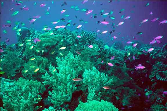 coral_reef_1.jpg