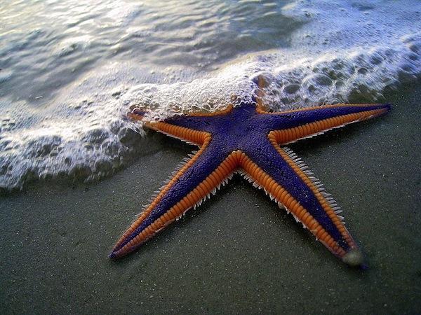 starfishrcw2.jpg